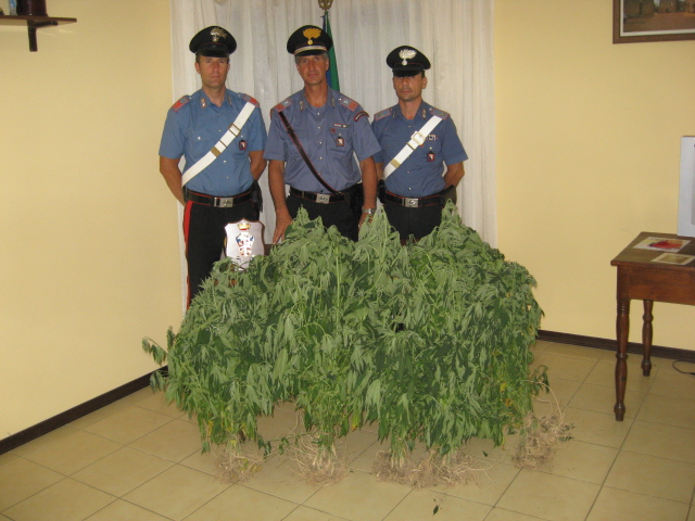 Sorano: padre e figlio in manette, coltivavano marijuana nell'orto