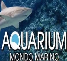 Aquarium Mondo Marino: tre anni di successi con uno sguardo puntato al futuro