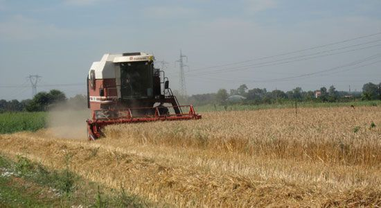 Crisi del grano: continua la battaglia Cia.Domani doppio appuntamento
