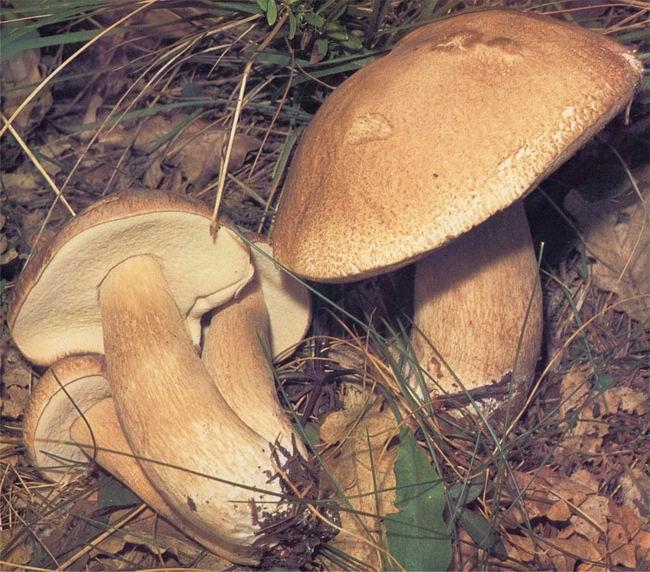 Photo of Attenzione ai funghi: micologi della Asl 9 a disposizione dei cercatori in caso di dubbi