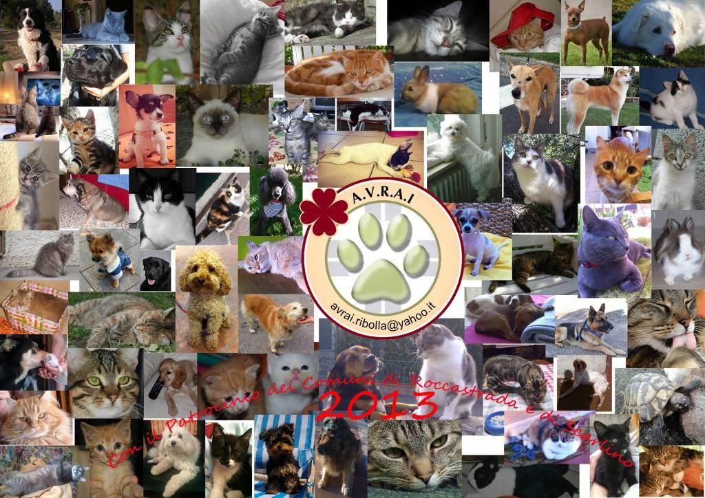 Cani e gatti di Ribolla in un calendario di beneficenza: una parte del ricavato andrà alla popolazione di Albinia colpite dall'alluvione