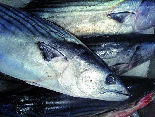 """Pesca, quasi 3 milioni ai progetti Flag della costa sud: """"Premiato impegno della Maremma"""""""