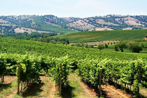 """Lo sviluppo della viticoltura al centro di un seminario a """"Le Mortelle"""""""