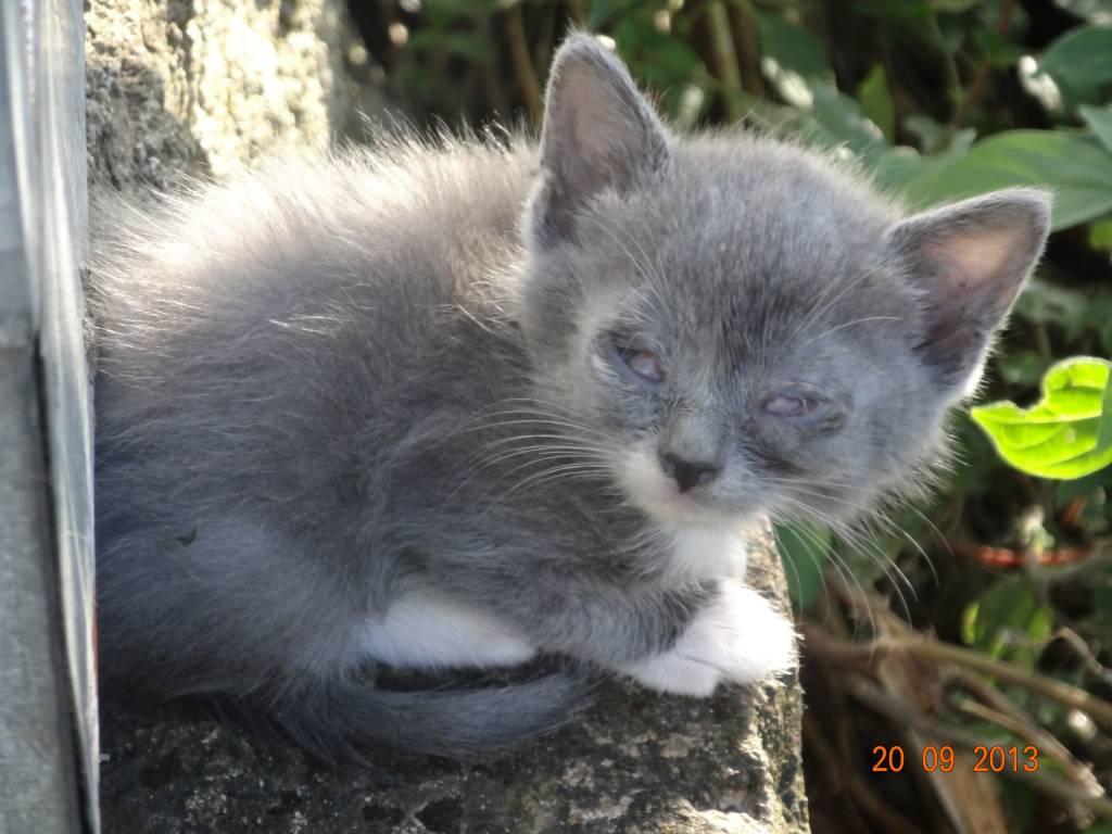 Saturnia: ancora gatti in condizioni di salute precarie salvati dalla Lac
