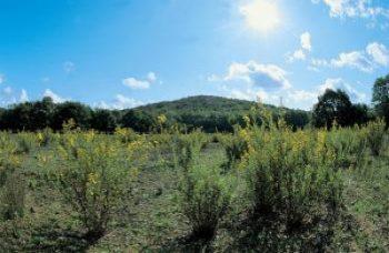Domenica 28 ottobre in programma una passeggiata alla scoperta dei funghi nel parco di Montioni