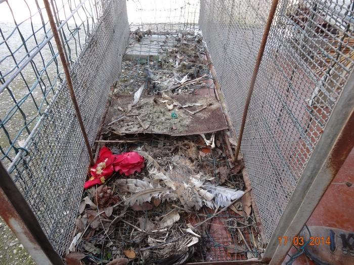 Usa una gabbia-trappola per catturare ed uccidere gli animali: denunciato bracconiere a Grosseto