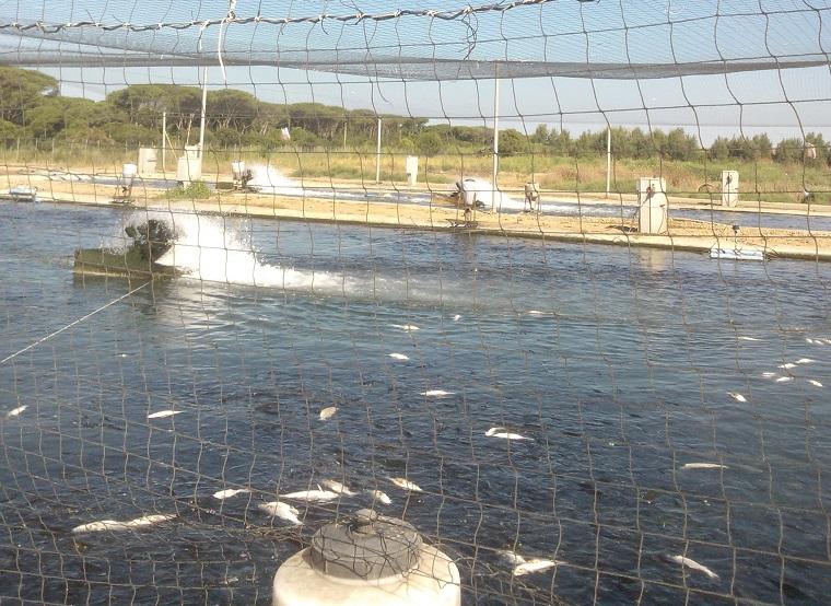 Aironi gabbiani e cormorani morti ad ansedonia la for Vasche per allevamento ittico