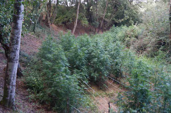 """Cannabis terapeutica, Marras e Sani: """"Il Cemivet può diventare polo nazionale di produzione"""""""