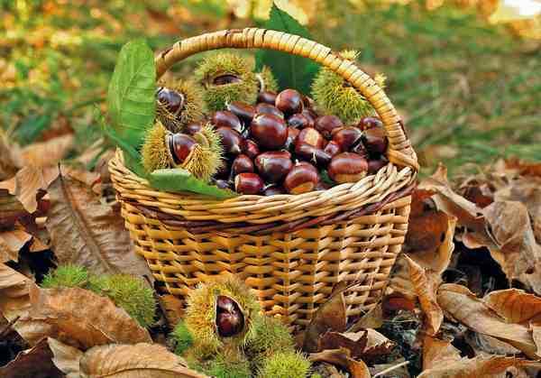 #AmiatAutunno: un ricco fine settimana all'insegna di castagne e funghi