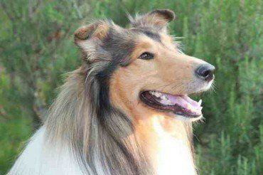 Grosseto ospita la prima mostra canina targata Acsi