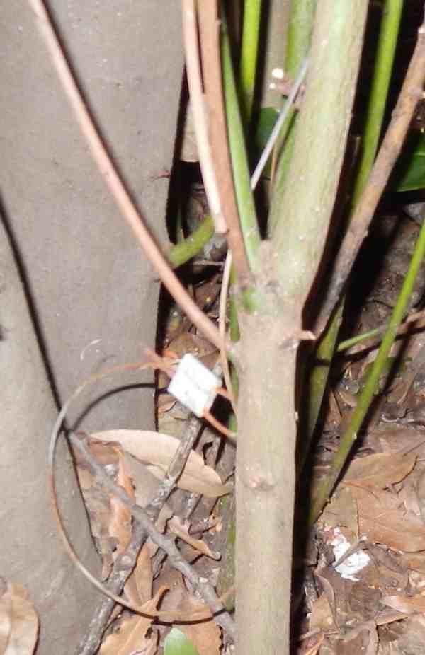 Uccide una martora con trappole illegali: denunciato bracconiere