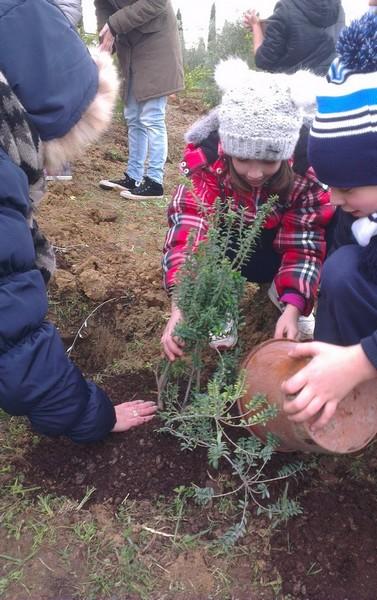 Photo of Un bosco sensoriale a Rispescia per la Festa dell'albero
