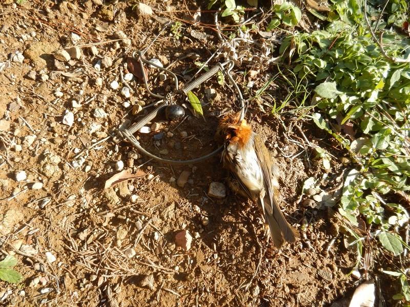 Photo of Bracconiere denunciato per uccisione di specie protette, caccia in giorno di silenzio venatorio e maltrattamento
