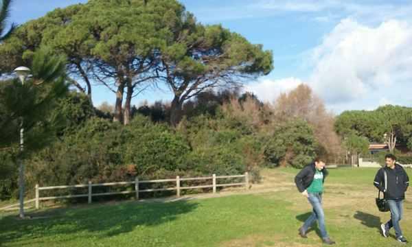 Follonica: iniziata la pulizia della pineta sul lungomare