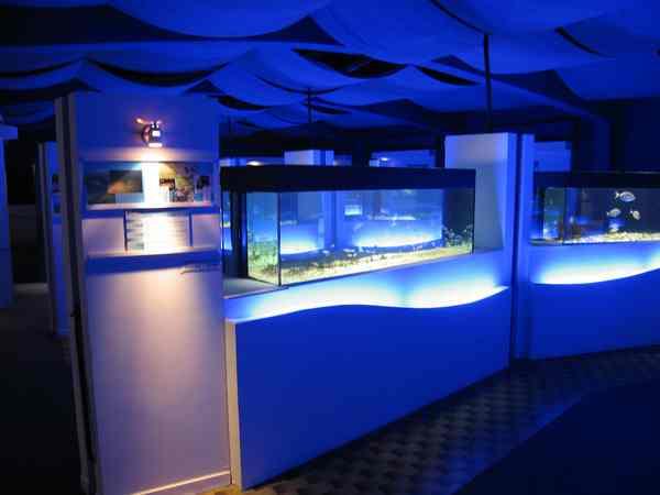 Pelagos Plastic Free: successo del workshop all'acquario di Talamone