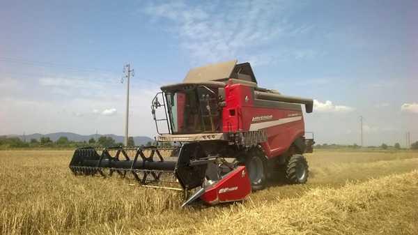 Crisi del grano, gli agricoltori:
