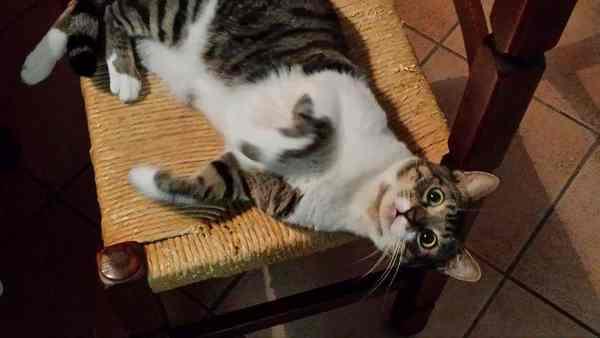 """Photo of Bruschetta scappa da casa. L'appello della proprietaria: """"Aiutatemi a ritrovare il mio gatto"""""""