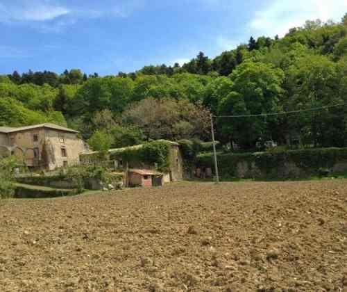 Sull'Amiata torna la coltivazione della cipolla grazie all'orto della Selva