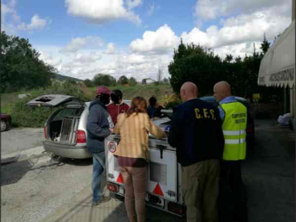 Trasporto di cani dalla Repubblica Ceca: documenti irregolari, multa da 6mila euro
