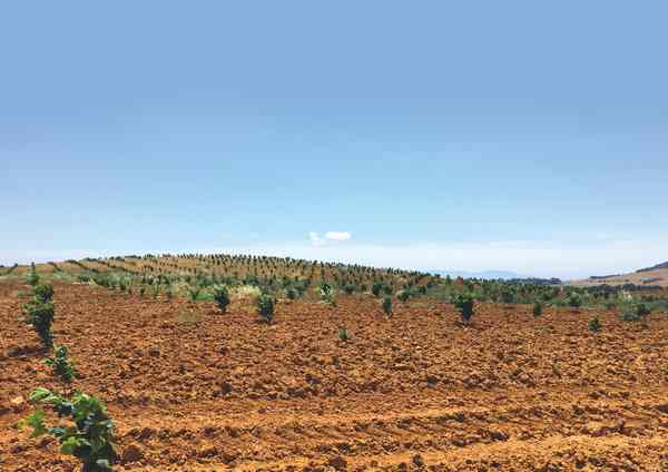 """""""Nocciole in Toscana"""", Loacker investe in Maremma: """"Occasione per rilanciare l'agricoltura"""""""