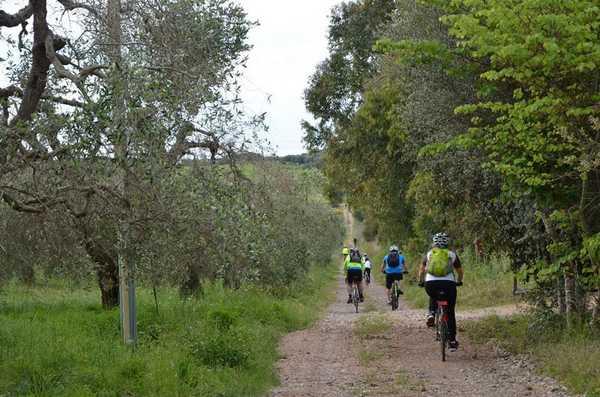 """""""Dalla Ferrovia del Carbone alla Ciclovia Tirrenica"""": ecco l'escursione in bici lungo antichi itinerari ferroviari"""