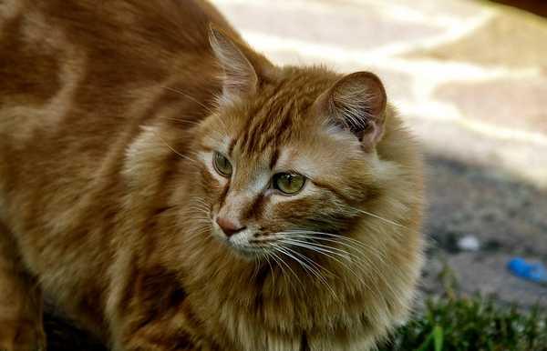 """Photo of Sid è scappato da casa, l'appello dei padroni: """"Aiutateci a ritrovare il nostro gatto"""""""