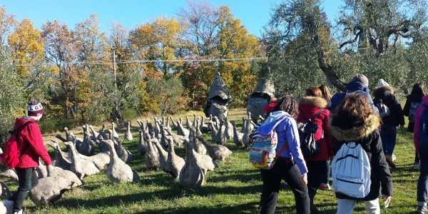 Alla scoperta del giardino di daniel spoerri visita guidata per bambini - Giardino di daniel spoerri ...