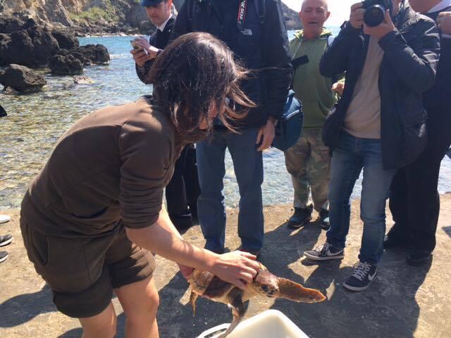 Guelfa ritorna a nuotare: una tartaruga Caretta Caretta liberata nel mare di Talamone