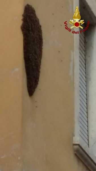 Sciame di api si ferma su un muro del centro: intervento dei Vigili del Fuoco