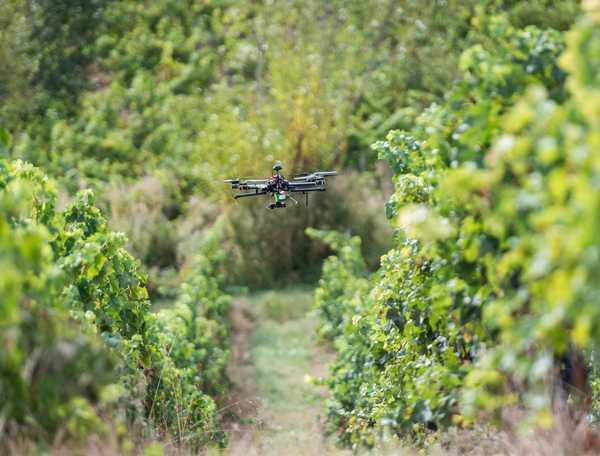 """""""Maremma Toscana meets Bordeaux"""": un confronto di sapori tra vini locali e francesi"""