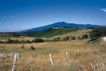 Servizio civile al Parco faunistico del Monte Amiata: selezionati due volontari