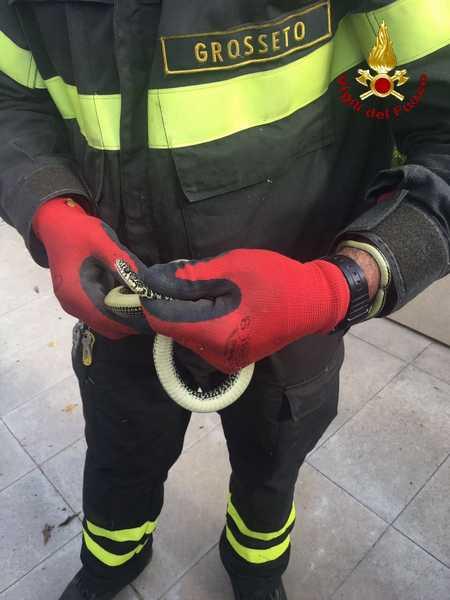 Ancora un serpente catturato in citt era su una for Soluzione giardino di era