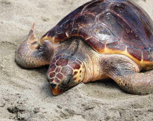 Legambiente, troppi rifiuti sulle spiagge italiane