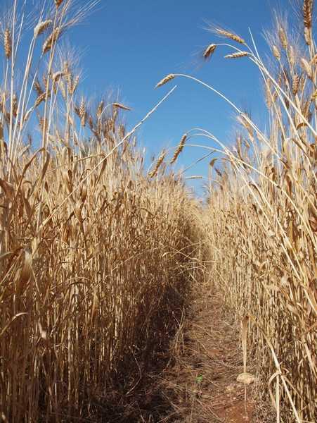 """Ceta, l'appello delle associazioni agricole ai Consigli comunali: """"Opportunità da cogliere"""""""