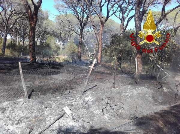 Photo of La Maremma brucia ancora: numerosi incendi, fiamme anche alle Marze