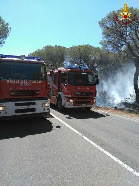 Photo of Incendio nella pineta tra Marina di Grosseto e Castiglione della Pescaia