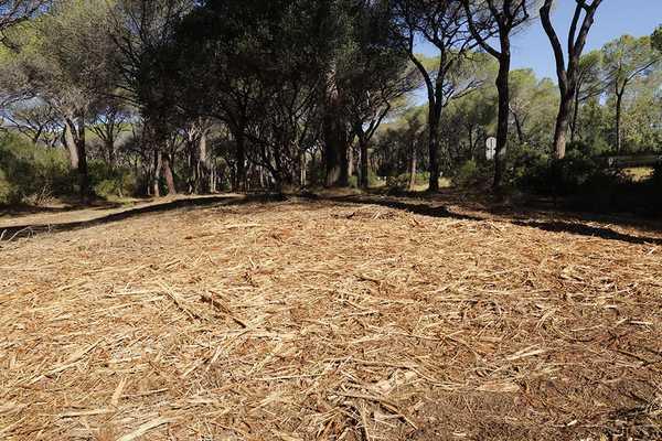 """Photo of Oasi San Felice, gli ambientalisti: """"Materiale secco abbandonato, rischio incendio elevato"""""""
