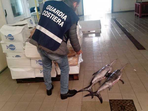 Operazione Nettuno: sanzioni e sequestri di pesce anche in Maremma