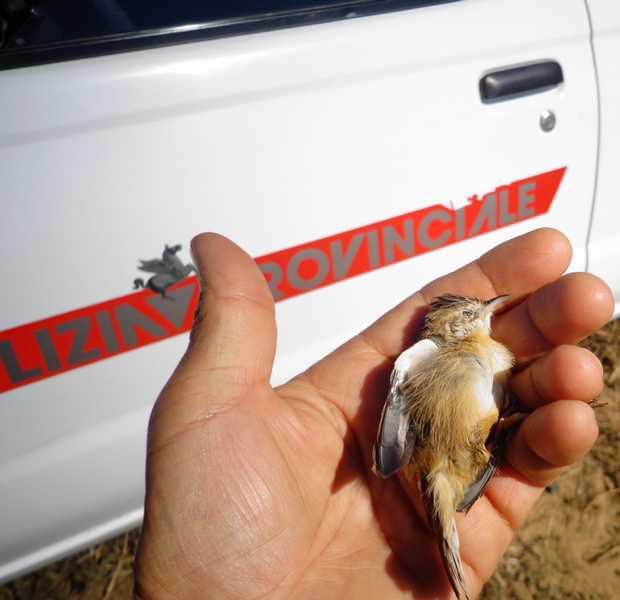 Abbattono volatili protetti: denunciati due cacciatori