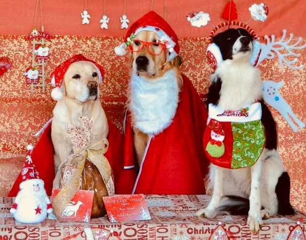 """""""Aiutaci ad aiutare"""": un panettone per sostenere le attività degli angeli a 4 zampe di Dog4life"""