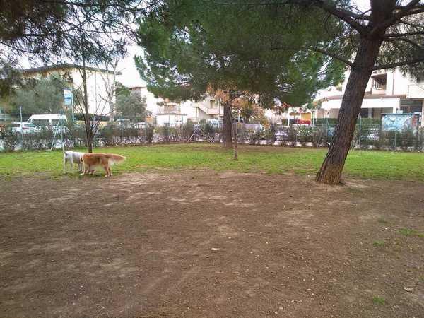 """Photo of Area di sgambamento, l'Oipa lascia la gestione: """"Troppe emergenze da risolvere"""""""
