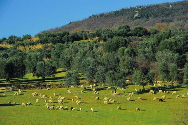 Registro nazionale dei paesaggi rurali: Semproniano ad un passo dall'iscrizione