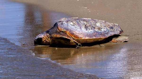 """Photo of """"Facciamo luce in mare!"""": un incontro contro la cattura delle tartarughe marine"""