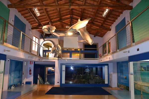 Imparare a riconoscere i serpenti al Museo di storia naturale