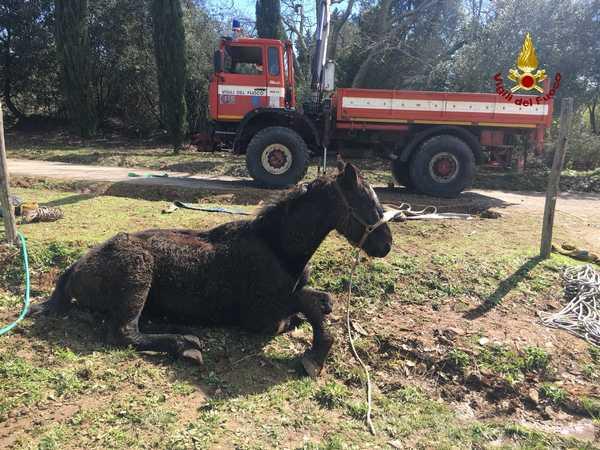 Photo of Cavallo cade in una fossa: soccorso e salvato dai Vigili del Fuoco