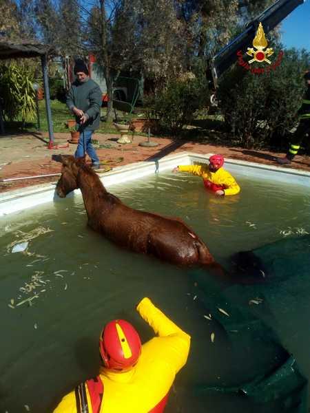 Photo of Cavallo cade in una piscina: soccorso e salvato dai Vigili del Fuoco