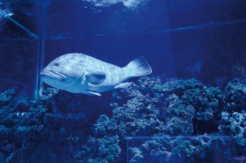 Acquario Mediterraneo dell'Argentario: gli orari di apertura nel weekend di Pasqua