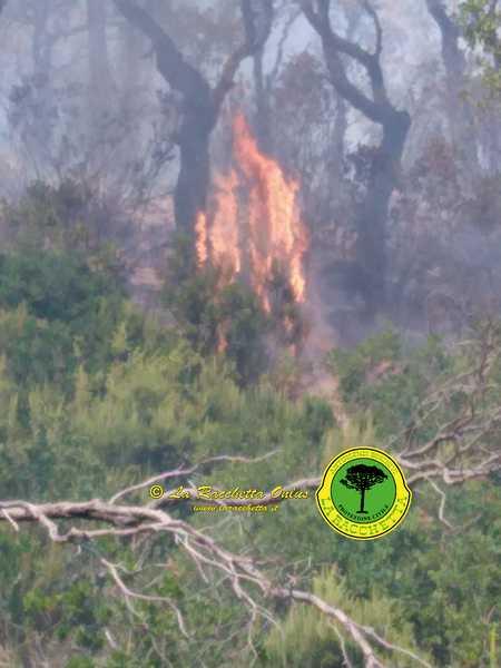Incendio in una pineta: due elicotteri dei Vigili del Fuoco e volontari sul posto