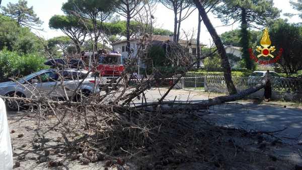 Albero cade sulla strada: intervento dei Vigili del Fuoco