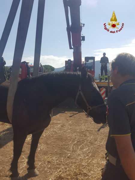 Cavallo ammalato non riesce ad alzarsi: messo in piedi dalla gru dei Vigili del Fuoco